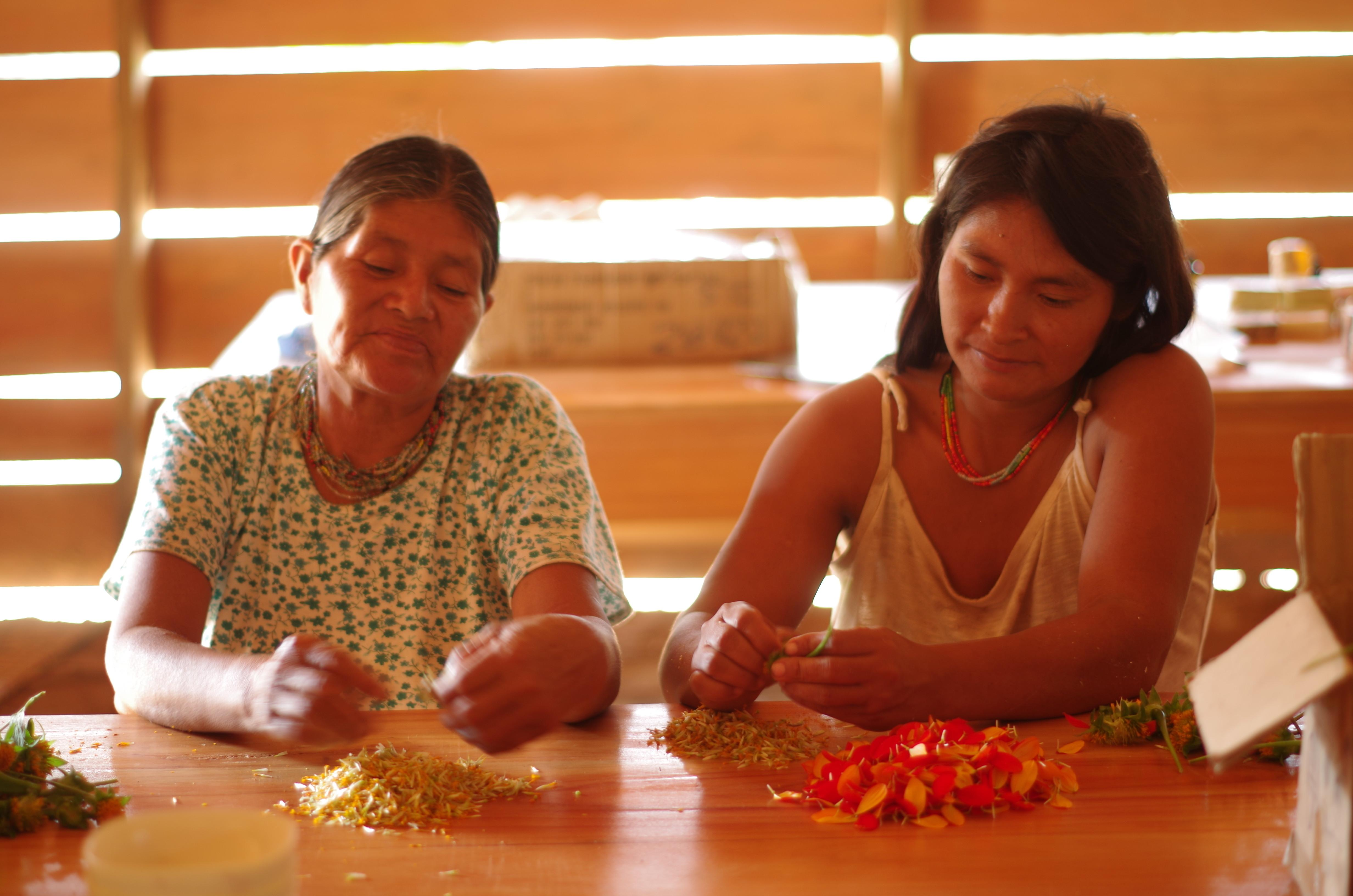 Sustainable forest management as the key to indigenous communities' climate adaptation