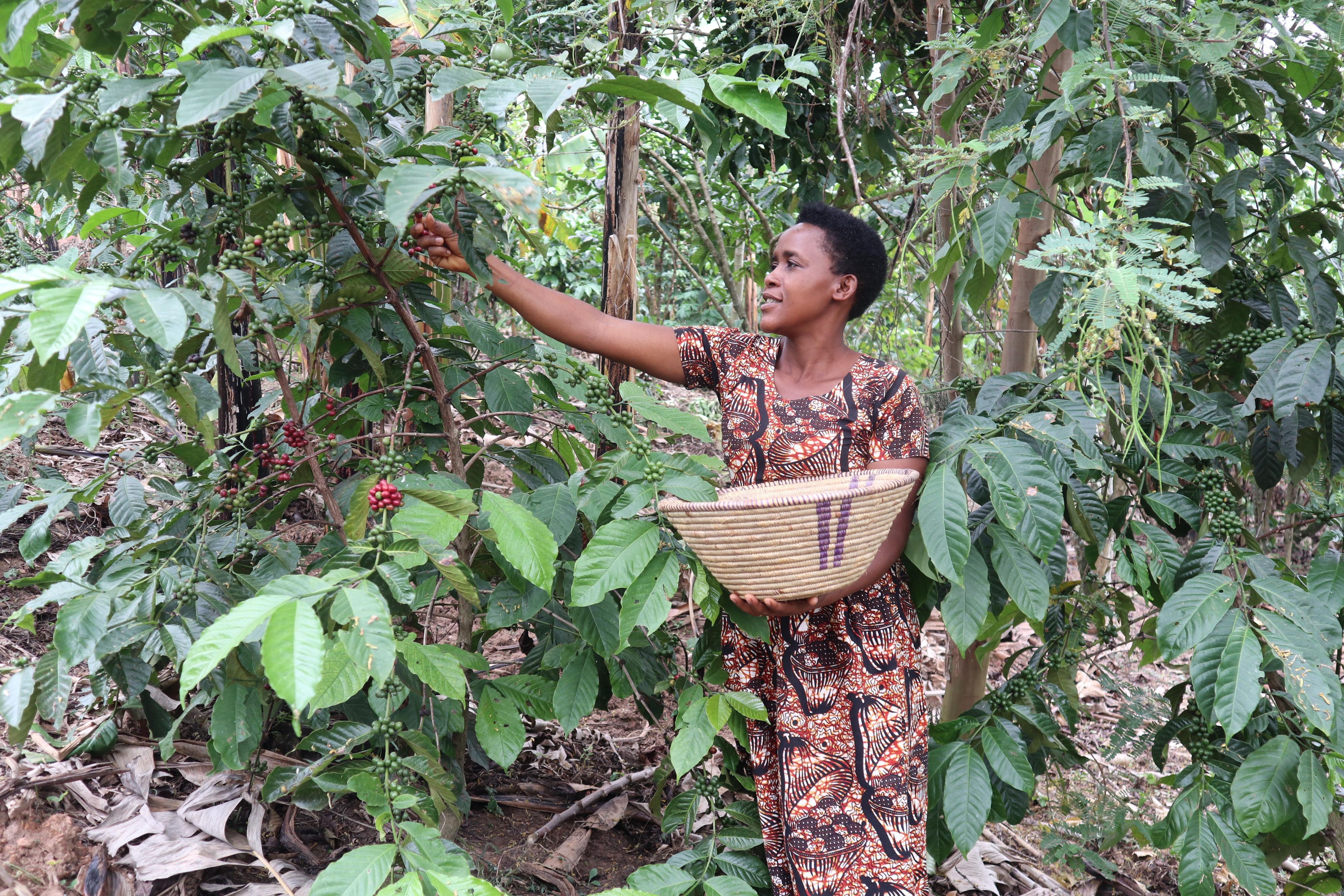 Growing resilient agricultural enterprises